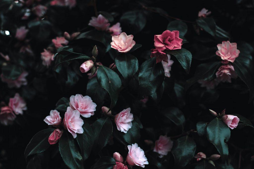 flowers bg